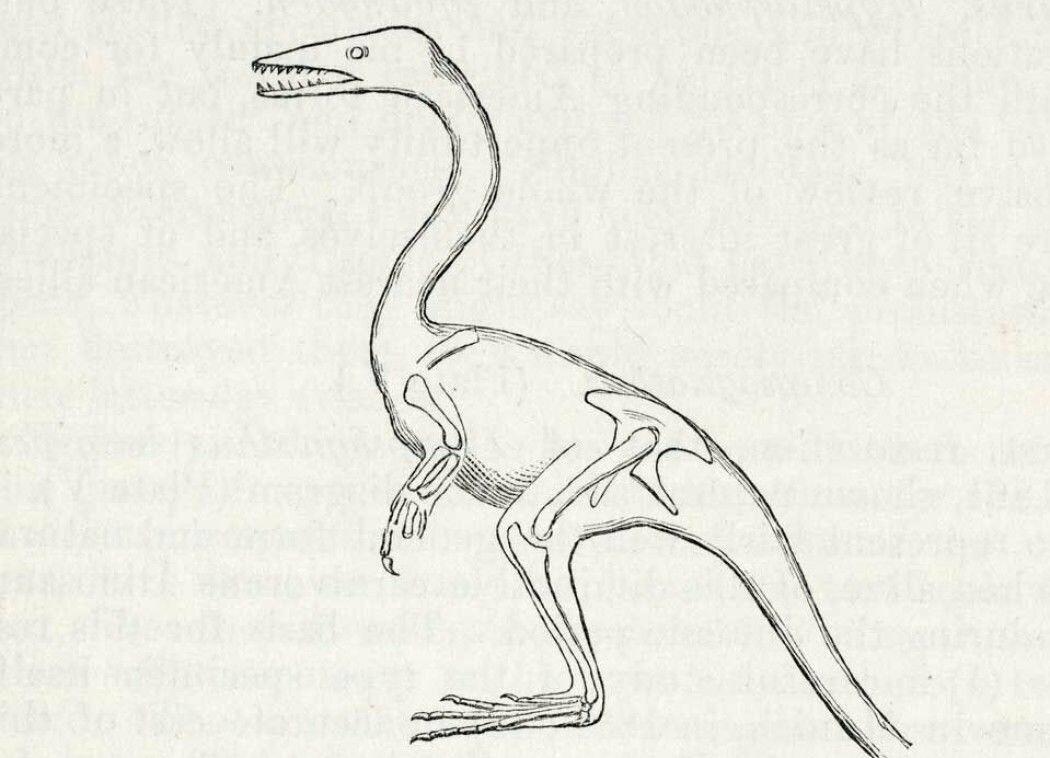 Slik tegnet Thomas Huxley den fugleaktige dinosauren.