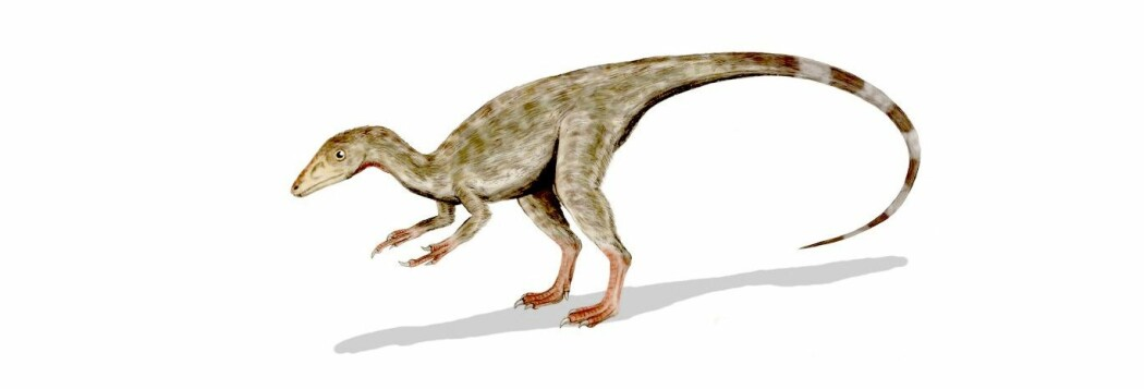 Omtrent slik tror forskere at den samme dinosauren så ut i dag.