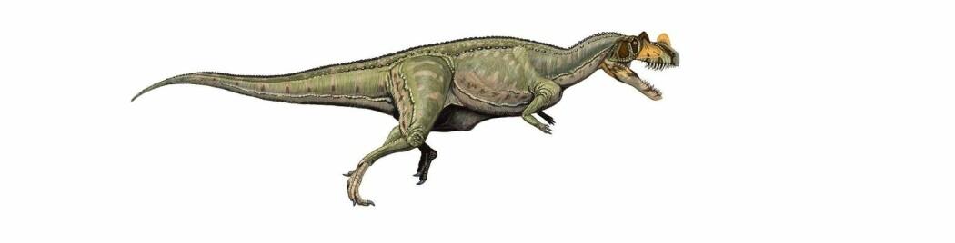 En moderne tegning av Ceratosaurus.