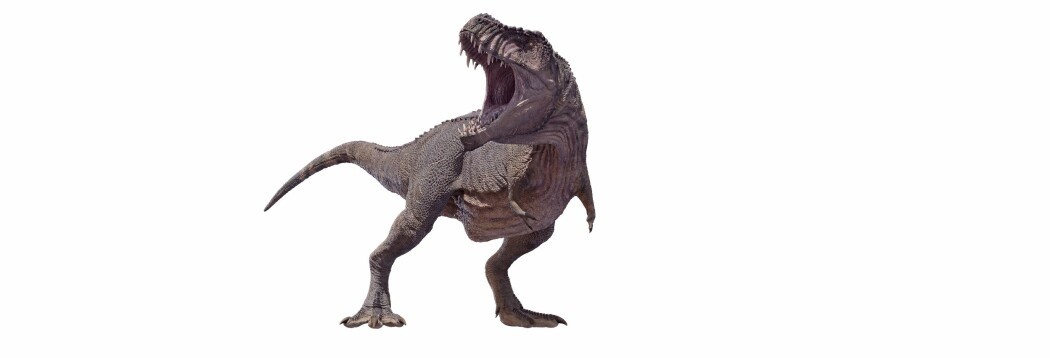 Tyrannosaurus rex slik den gjerne fremstilles i dag.
