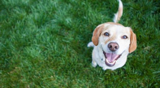Hunder kan sanse varme på avstand med snuta