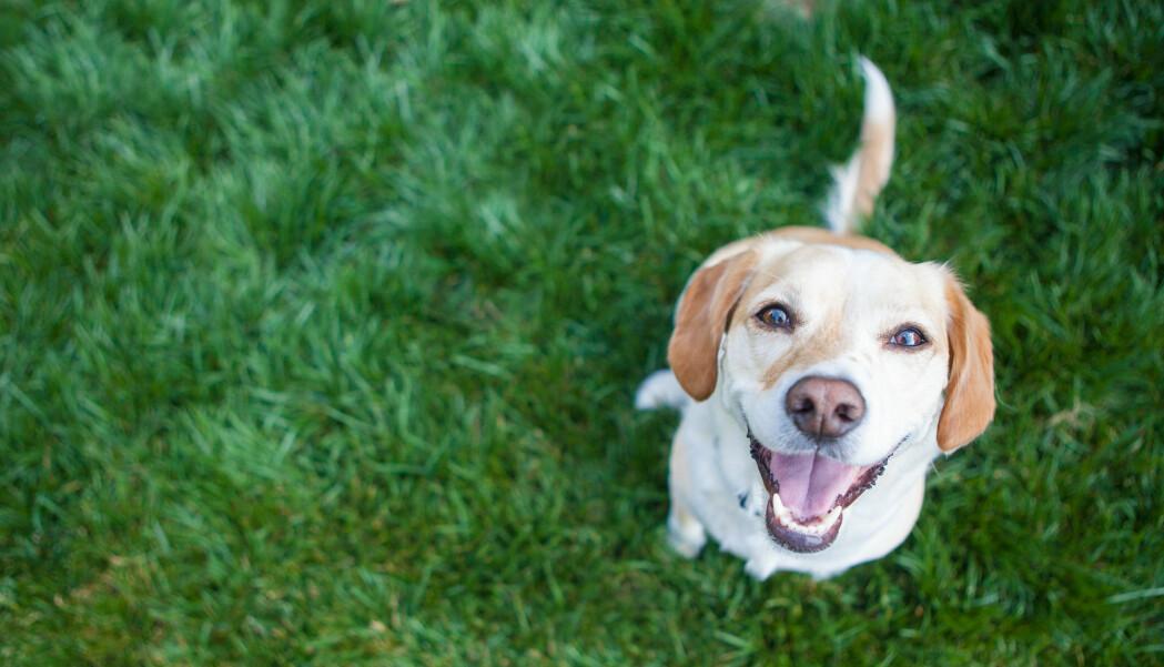 Hundenesa gir hunden svært god luktesans, men ikke nok med det; snuta brukes til å oppdage svak varme fra omgivelsene, viser ny forskning.