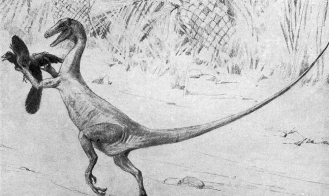 Charles Knight tegnet denne raptor-dinosauren på 1800-tallet. Nå tror forskere at den så ganske så annerledes ut.