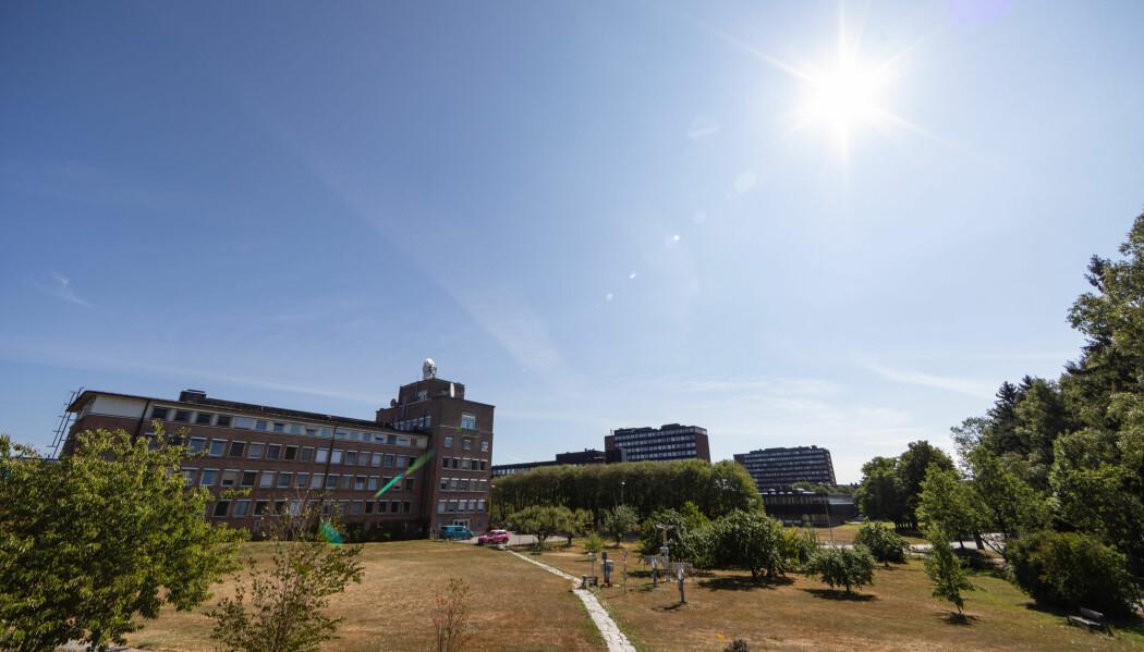 Bytrær kjøler. Her er det sol og tørt gress hos Meteorologisk institutt på Blindern i Oslo en sommerdag i 2018. (Foto: NTB scanpix)