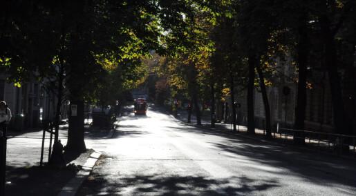 Trær i byen gjør hetebølger mer levelige