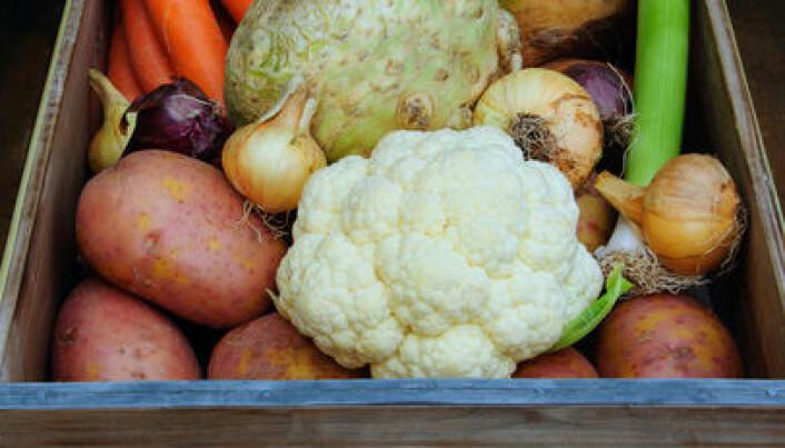 Nordisk hverdagsmat senker kolesterolet
