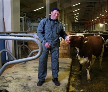Stipendiat Lars Erik Ruud i løsdriftsfjøs med åpen liggebås. (Foto: Vincent Musi)