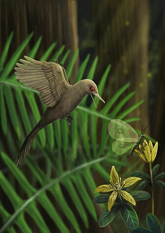 Slik kan Oculudentavis khaungraae ha sett ut da den levde for 99 millioner år siden.
