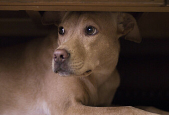 Også hunder kan få psykiske problemer