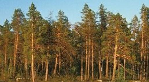 Hvilket fylke har mest skog?