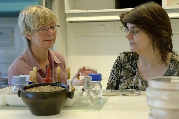Forskerne Guro Brodal (t v) og Sonja Klemsdal ved Bioforsk. (Foto: Erling Fløistad)