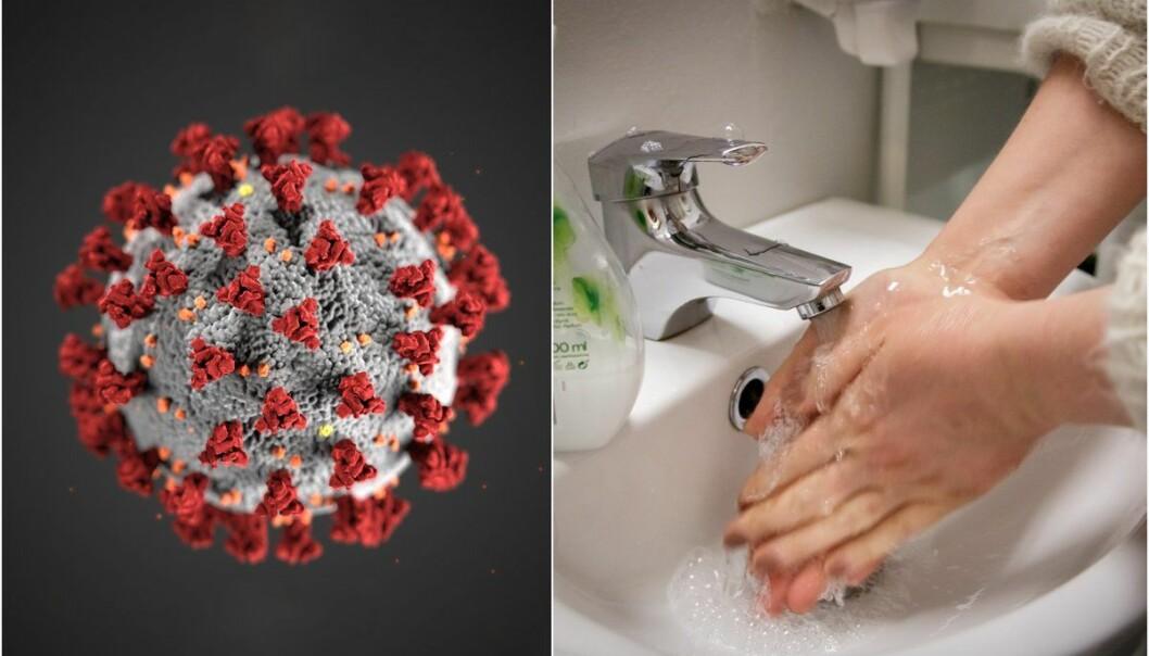 – Handvask fungerer ved at såpe bind seg til feitt og smuss utanpå huda og gjer at det losnar. Når du fjernar dette, følger virus og bakteriar med.