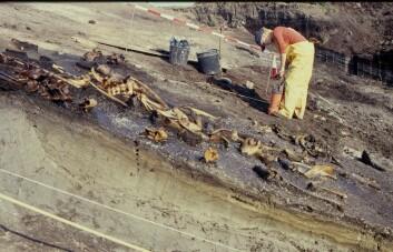 De nye dateringene viser at knoklene er deponert ved minst tre forskjellige tidspunkter i perioden 9700–9000 f.Kr. (Foto: Charlie Christensen, Nationalmuseet)