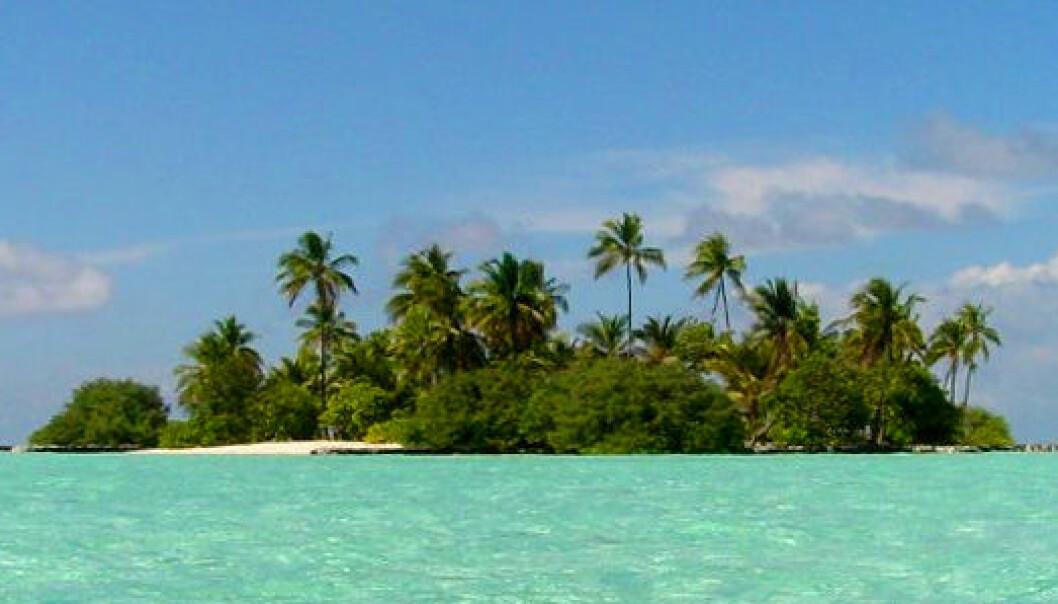 En øy i Maldivene (Foto: Patrick Verdier)
