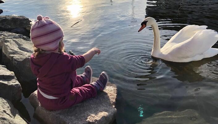 Jente hilser på svane i Oslofjorden nær operaen en februardag. Der kan miljøet i fjorden bli enda rikere, til beste for både folk og livet i sjøen.