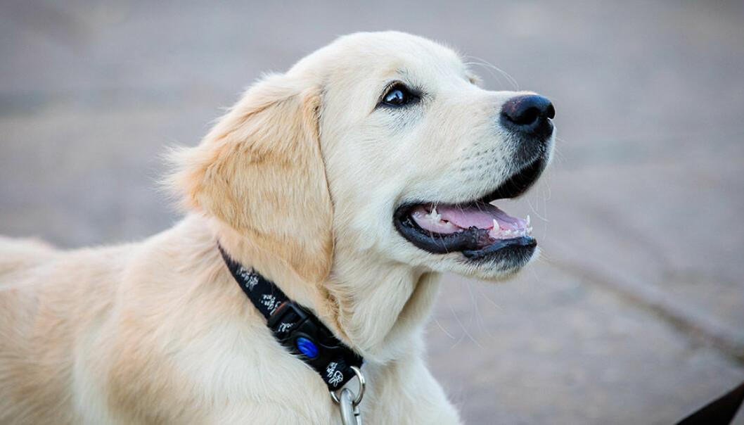 Skal vi ta forholdregler også med tanke på å klappe andres hunder?