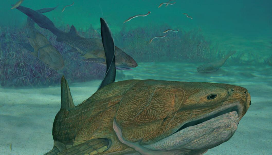 Dette kan være det tidligste fjeset vi kjenner til, og viser at den moderne kjeve kan ha oppstått lenger ned på evolusjonstreet enn vi har trodd. (Illustrasjon: Brian Choo)
