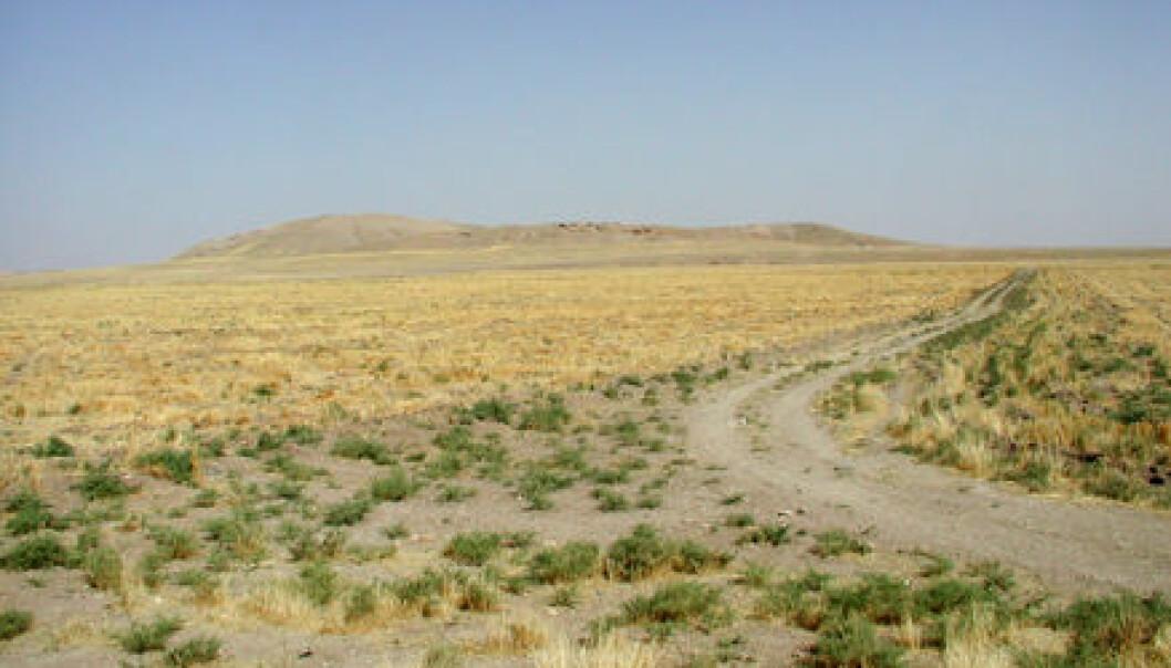 """Den sentrale jordhaugen i Tell Brak er resultatet av 4000 år med bosetning.(Foto: Jason A. Ur)."""