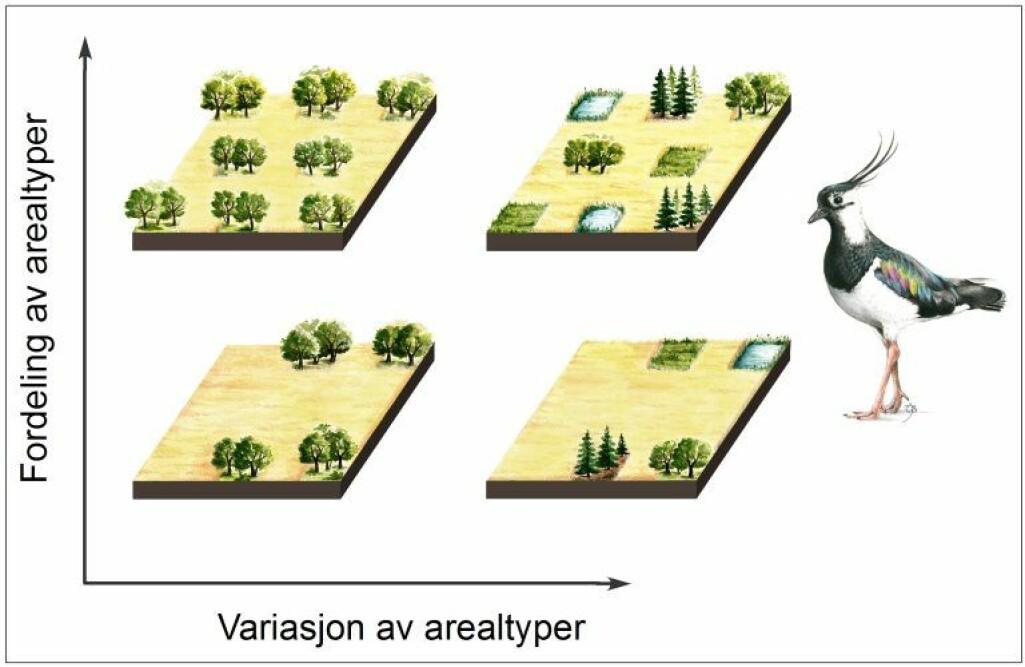 Forenklet figur som viser sammenhengen mellom fordeling av arealtyper og variasjon i antall arealtyper. Det optimale landskapet for kulturlandskapets fuglearter befinner seg øverst til høyre i diagrammet med høy diversitet og romlig heterogenitet. Landskapsutforminger som befinner seg nederst og til venstre i diagrammet bør unngås dersom hensynet til biologisk mangfold skal ivaretas.