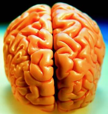 """""""Hjernen kan kanskje modelleres i en datamaskin, men bevissthet oppstår sannsynligvis ikke av seg selv bare kompleksiteten av et system er stor nok. (Illustrasjon: ktsimage)"""""""