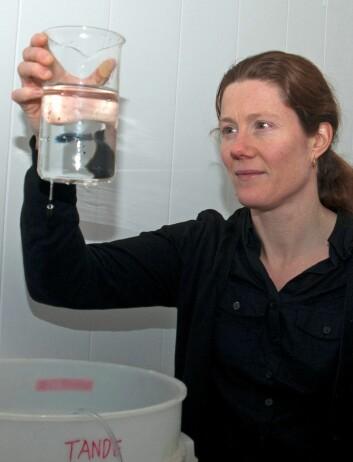Elisabeth Halvorsen overvåker eggproduksjonen til kvalåte hun tok med seg hjem fra tokt. (Foto: Rudi Caeyers)