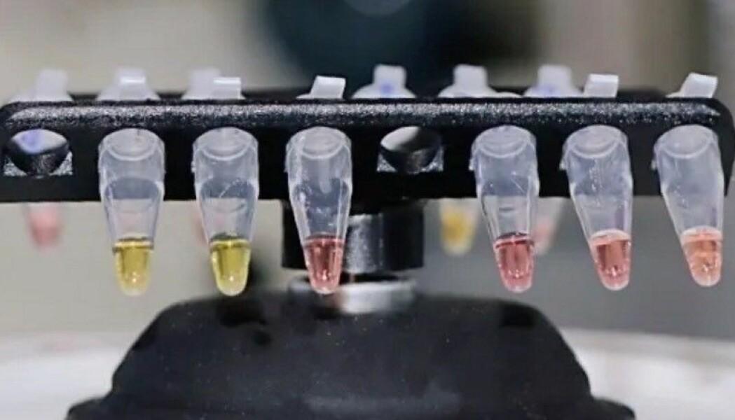 En ny hurtigtest er utviklet ved Universitetet i Oxford, som kan gi svar i løpet av en halv time. Prøven skifter farge om den er positiv