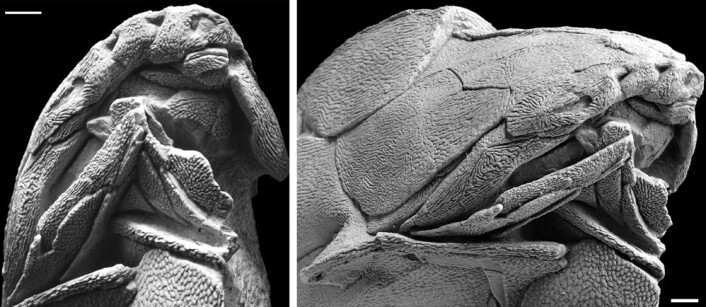 Fossilet er veldig godt bevart, og ble funnet i Kina. (Foto: (Illustrasjon: Brian Choo))