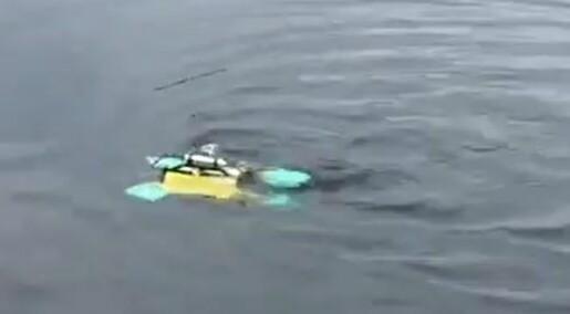 Robotskilpadder gjør fisken mindre stresset