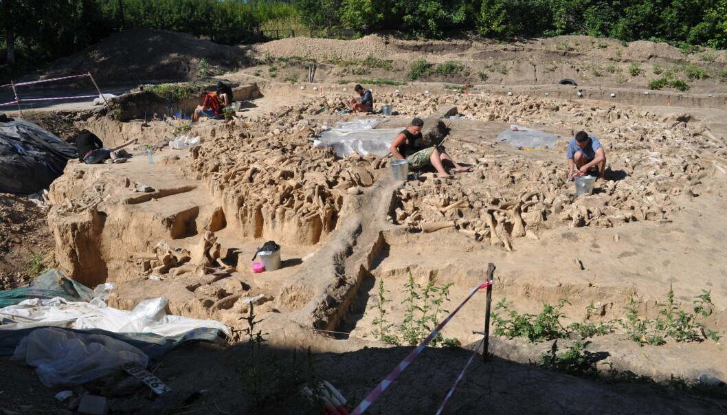 Her graver forskerne ut den ni meter brede sirkelen av bein.