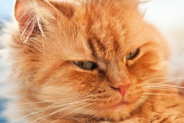 Stadig flere hunder og katter får utskrevet antidepressiva, og i Sverige har salget økt kraftig. (Foto: Colourbox)