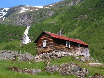 Det er i Sogn og Fjordane vi finner flest av de største eiendomsteigene uten klart definerte eiere. (Foto: Kari Stensgaard / Skog og landskap)