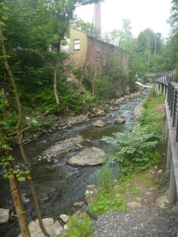 Alna i Svartdalen. (Foto: Svein Jakob Saltveit, NHM)