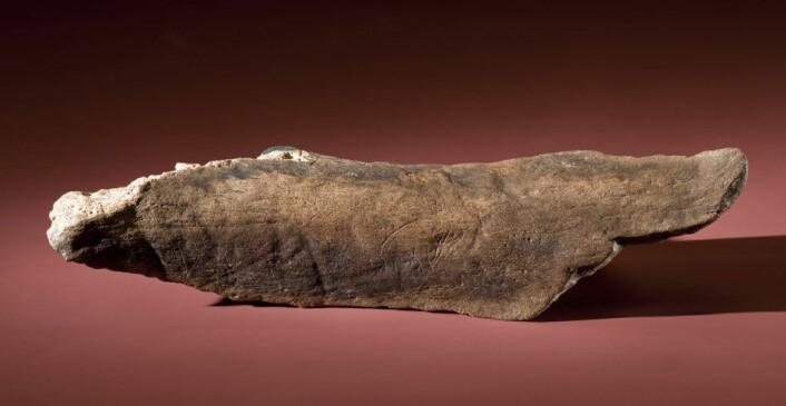 Det fossile beinet med innrissing er fra et stort dyr, kanskje en mammut. Det kan være 20 000 år gammelt. (Foto: Chip Clark/Smithsonian)