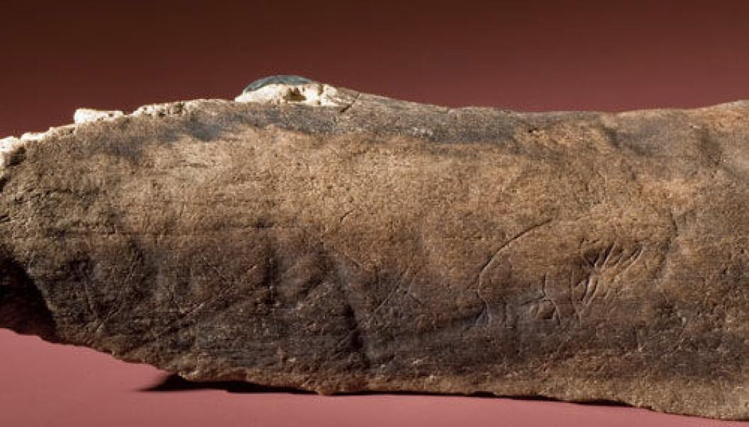 Dette fossile beinet med en utdødd mammut eller mastadont innrisset er det eldste kjente eksempelet på steinalderkunst av denne typen fra Amerika. (Foto: Chip Clark/Smithsonian) Foto: Chip Clark/Smithsonian