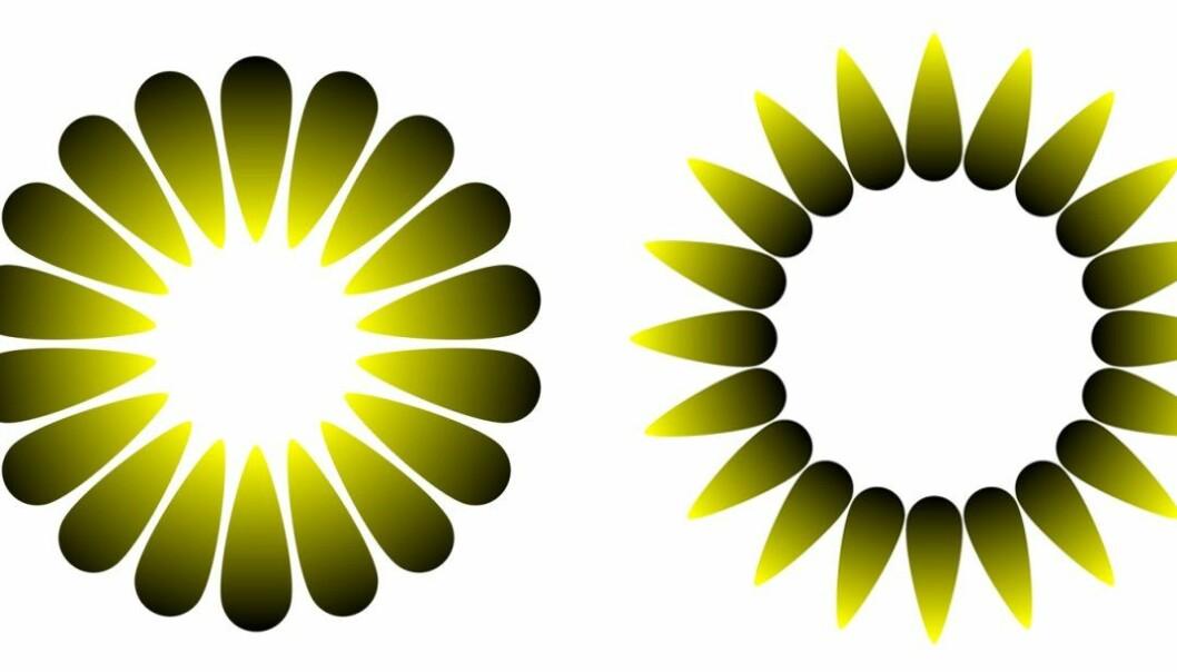 Disse to illusjonene er tilpasset etter design fra psykologen og kunstneren Akiyoshi Kitaoka. Figuren til venstre heter «Morning sunlight», og har tilsynelatende et sterkt lys i midten. Den til høyre heter «Evening dusk», og her ser midten ut til å være mørkere enn bakgrunnen rundt. De to figurene er egentlig like lyse. Klikk på forstørrelsesglasset for større versjon. (Figurer: Bruno Laeng, Tor Endestad og Akiyoshi Kitaoka)