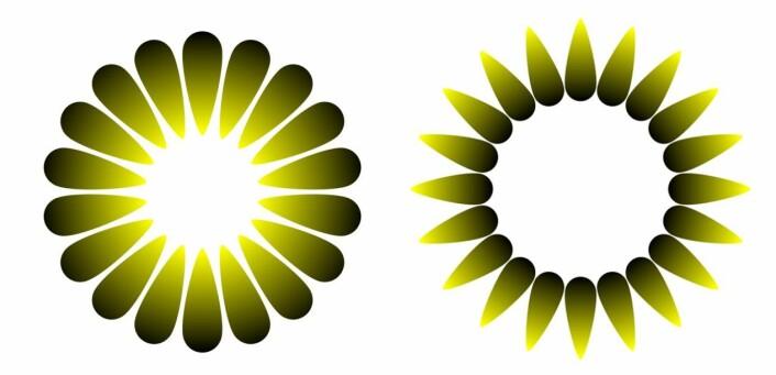 Disse to illusjonene er tilpasset etter design fra psykologen og kunstneren Akiyoshi Kitaoka. Figuren til venstre heter «Morning sunlight», og har tilsynelatende et sterkt lys i midten. Den til høyre heter «Evening dusk», og her ser midten ut til å være mørkere enn bakgrunnen rundt. De to figurene er egentlig like lyse. Klikk på forstørrelsesglasset for større versjon. (Foto: (Figurer: Bruno Laeng, Tor Endestad og Akiyoshi Kitaoka))