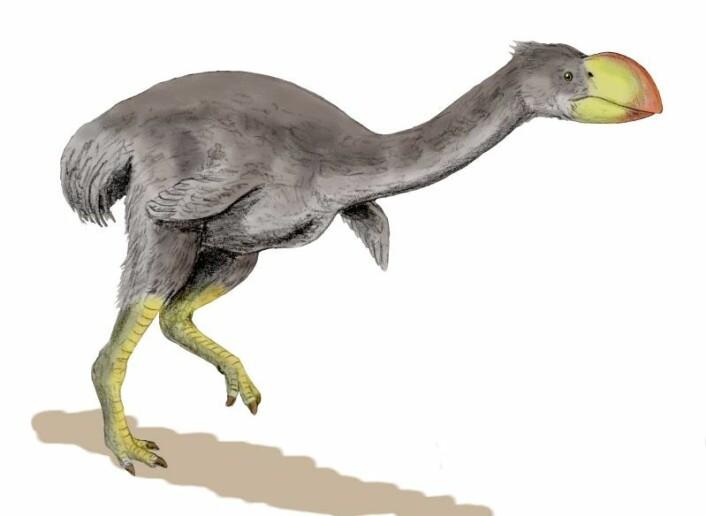Dromornis stirtoni, en stor fugl som ikke kunne fly. Fuglen kunne bli opp mot tre meter høy og veide rundt 500 kilo. Den levde fram til for rundt 30 000 år siden. (Foto: (Illustrasjon: Nobu Tamura/Wikimedia Commons))