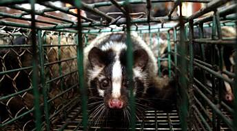 Smitte fra dyr til mennesker kan også bli opphavet til den neste store epidemien