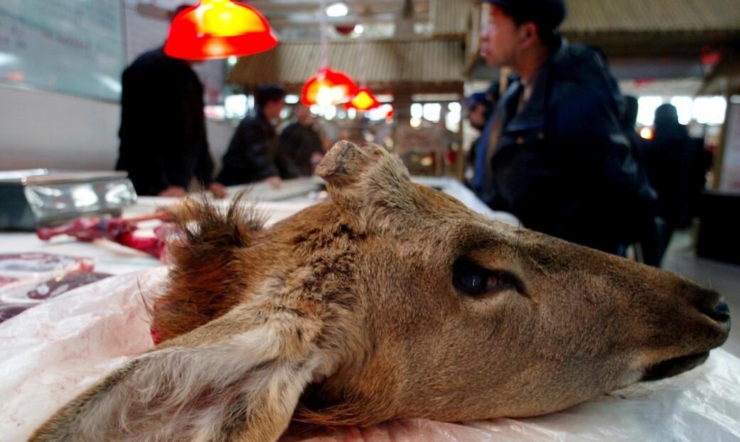 Hodet til en hjort på et marked i Beijing som spesialiserte seg på å selge ville dyr som kjøtt. Bildet er fra 2002.