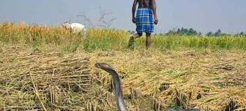 Hvorfor har slanger gift?