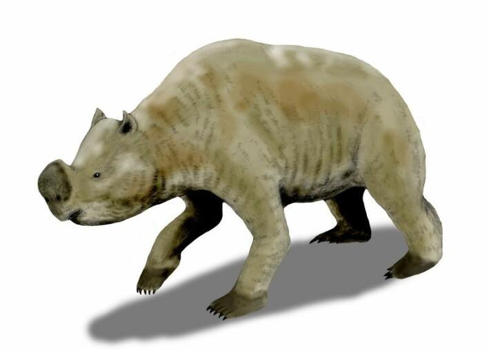 Zygomaturus trilobus var et stort pungdyr som ble rundt 1,5 meter høyt, 2,5 meter langt og veide rundt 500 kilo. (Foto: (Illustrasjon: Nobu Tamura/Wikimedia Commons))