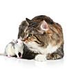 Ett eneste gen holder mus unna pus