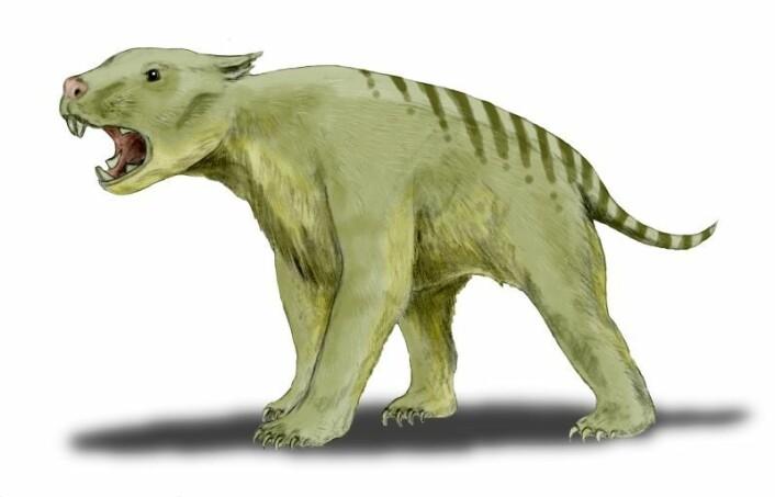 Thylacoleo carnifex, eller pungløven, var et rov-pungdyr som veide rundt hundre kilo. Den kunne bite like kraftig som en afrikansk løve på 250 kilo. (Foto: (Illustrasjon: Nobu Tamura/Wikimedia Commons))