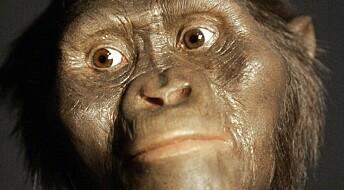 Lucy og slekten hennes hadde hjerner som aper, men en lengre barndom, slik som mennesker