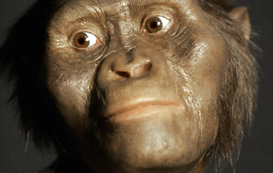 Lucy levde for 3,2 millioner år siden. Menneskeslekten Homo er kanskje direkte etterkommere av hennes art.