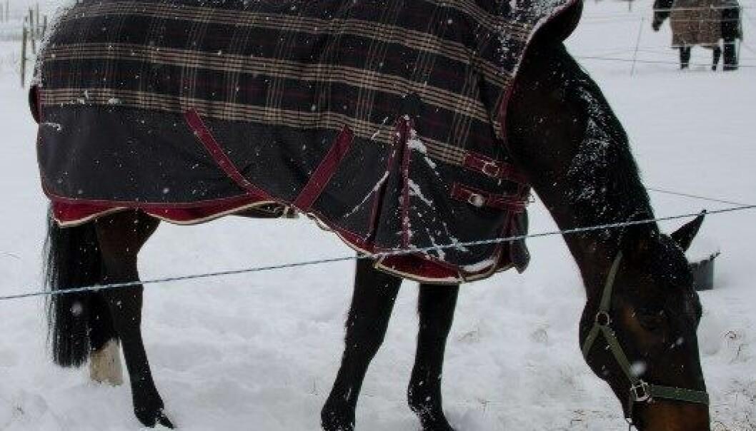 Spør hestene om de fryser