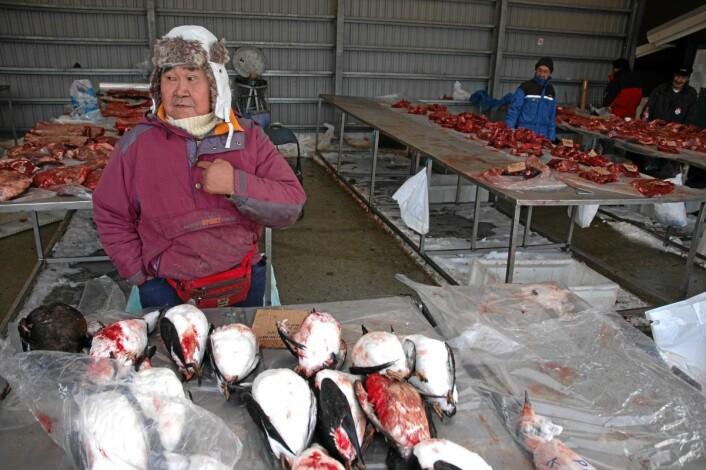 Efraim selger alker og reinsdyrkjøtt i Nuuk, hovedstaden på Grønland. På få tiår har Grønland gått fra et tradisjonelt fangssamfunn til et moderne samfunn. Kosten har endret seg, og det gir økt risiko for diabetes. (Foto: Aftenposten)