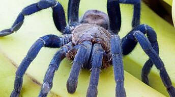 Edderkopper vokser i skremte øyne