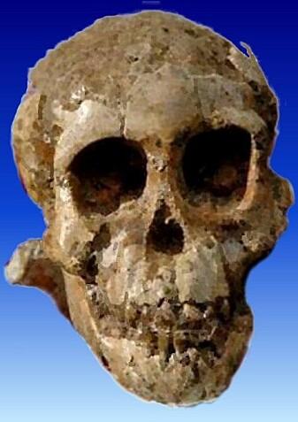 Selam var en et barn av arten A. afarensis og en av de viktige kildene til kunnskap om hvordan vi ble til.