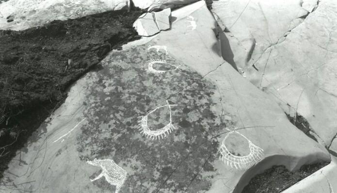 Knut Helskog undersøkte og dokumenterte alle de nye funnene av bergkunst i Alta på 70-tallet, og allerede da han tok de første bildene av figurene i 1976, var den tredje bjørnen borte. Torva var akkurat tatt av berget. Der berget lå uten torv, vokste det lav. De to gjenværende bjørnene er helt øverst på bildet.